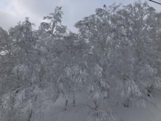 美しいホワイトツリー!駒ヶ岳への登山口も近くです。